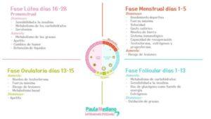Fases Ciclo menstrual